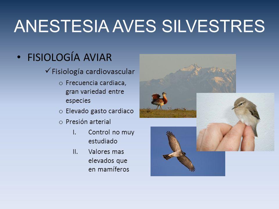 FISIOLOGÍA AVIAR Fisiología cardiovascular o Frecuencia cardiaca, gran variedad entre especies o Elevado gasto cardiaco o Presión arterial I.Control no muy estudiado II.Valores mas elevados que en mamíferos ANESTESIA AVES SILVESTRES