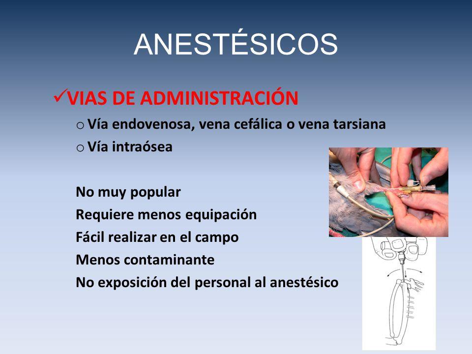 ANESTÉSICOS VIAS DE ADMINISTRACIÓN o Vía endovenosa, vena cefálica o vena tarsiana o Vía intraósea No muy popular Requiere menos equipación Fácil real