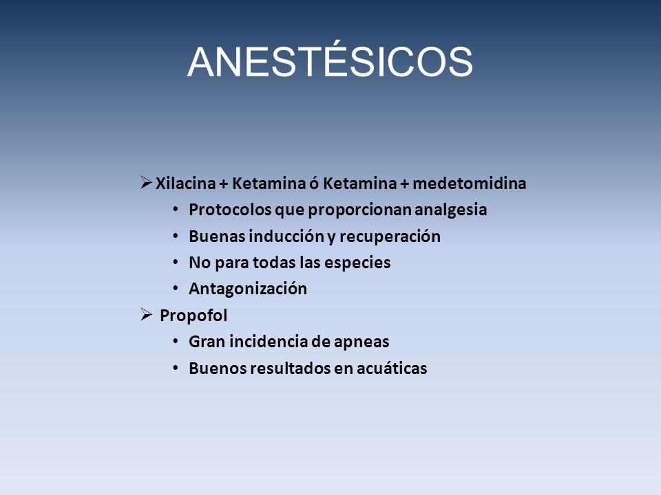 ANESTÉSICOS Xilacina + Ketamina ó Ketamina + medetomidina Protocolos que proporcionan analgesia Buenas inducción y recuperación No para todas las espe