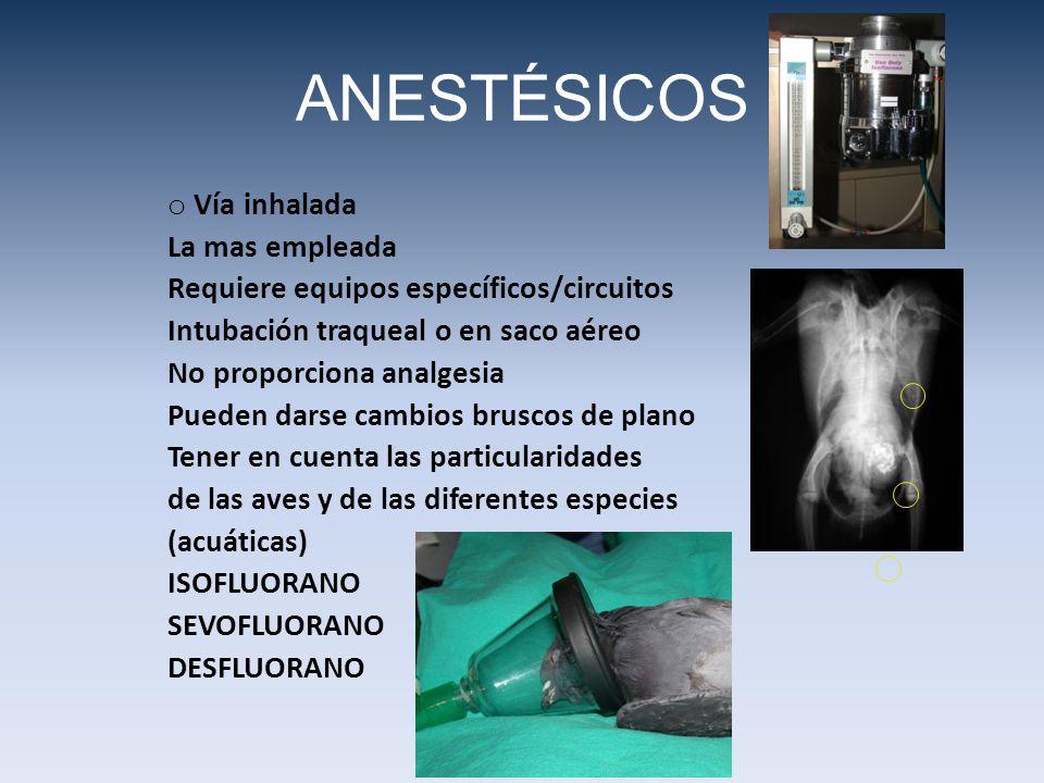 ANESTÉSICOS o Vía inhalada La mas empleada Requiere equipos específicos/circuitos Intubación traqueal o en saco aéreo No proporciona analgesia Pueden