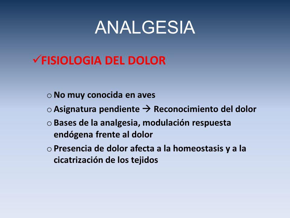 ANALGESIA FISIOLOGIA DEL DOLOR o No muy conocida en aves o Asignatura pendiente Reconocimiento del dolor o Bases de la analgesia, modulación respuesta