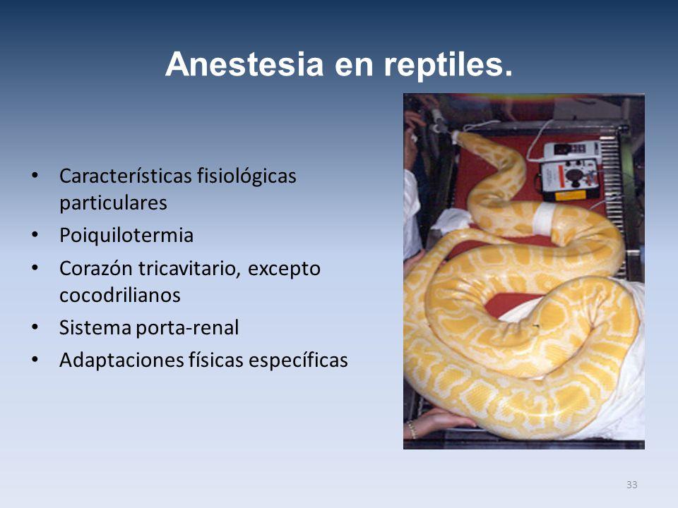 Anestesia en reptiles. Características fisiológicas particulares Poiquilotermia Corazón tricavitario, excepto cocodrilianos Sistema porta-renal Adapta
