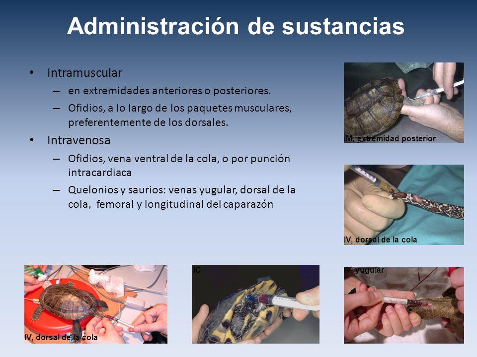 Administración de sustancias Intramuscular – en extremidades anteriores o posteriores. – Ofidios, a lo largo de los paquetes musculares, preferentemen