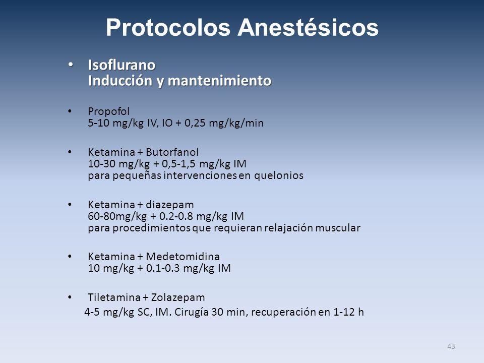 Protocolos Anestésicos Isoflurano Inducción y mantenimiento Isoflurano Inducción y mantenimiento Propofol 5-10 mg/kg IV, IO + 0,25 mg/kg/min Ketamina + Butorfanol 10-30 mg/kg + 0,5-1,5 mg/kg IM para pequeñas intervenciones en quelonios Ketamina + diazepam 60-80mg/kg + 0.2-0.8 mg/kg IM para procedimientos que requieran relajación muscular Ketamina + Medetomidina 10 mg/kg + 0.1-0.3 mg/kg IM Tiletamina + Zolazepam 4-5 mg/kg SC, IM.