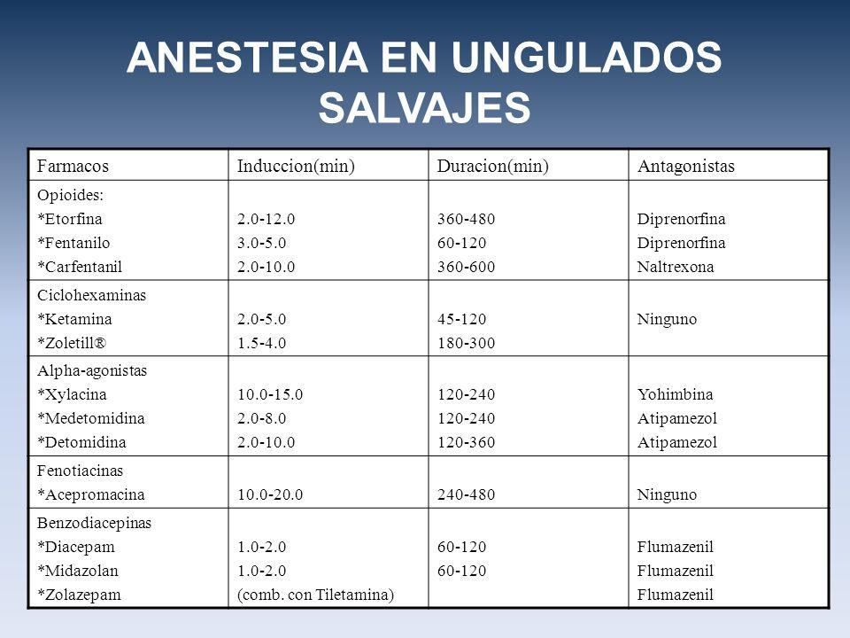 ANESTESIA EN UNGULADOS SALVAJES FarmacosInduccion(min)Duracion(min)Antagonistas Opioides: *Etorfina *Fentanilo *Carfentanil 2.0-12.0 3.0-5.0 2.0-10.0 360-480 60-120 360-600 Diprenorfina Naltrexona Ciclohexaminas *Ketamina *Zoletill® 2.0-5.0 1.5-4.0 45-120 180-300 Ninguno Alpha-agonistas *Xylacina *Medetomidina *Detomidina 10.0-15.0 2.0-8.0 2.0-10.0 120-240 120-360 Yohimbina Atipamezol Fenotiacinas *Acepromacina10.0-20.0240-480Ninguno Benzodiacepinas *Diacepam *Midazolan *Zolazepam 1.0-2.0 (comb.