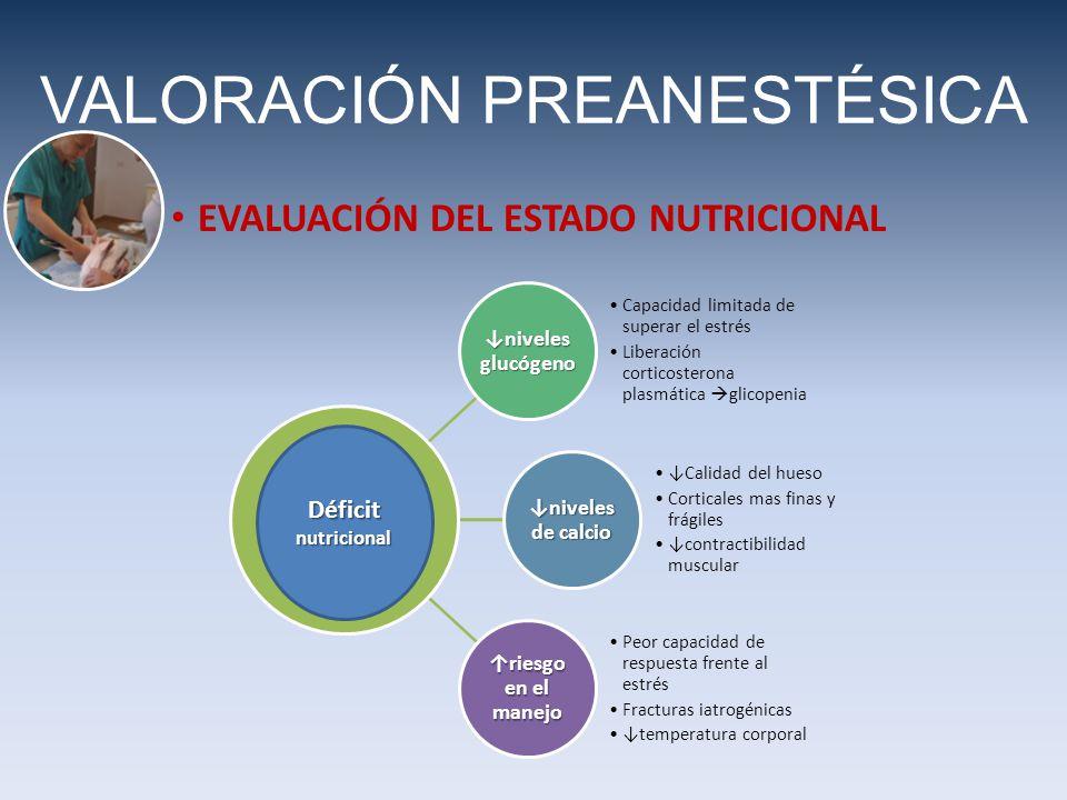 VALORACIÓN PREANESTÉSICA EVALUACIÓN DEL ESTADO NUTRICIONAL niveles glucógeno Capacidad limitada de superar el estrés Liberación corticosterona plasmát