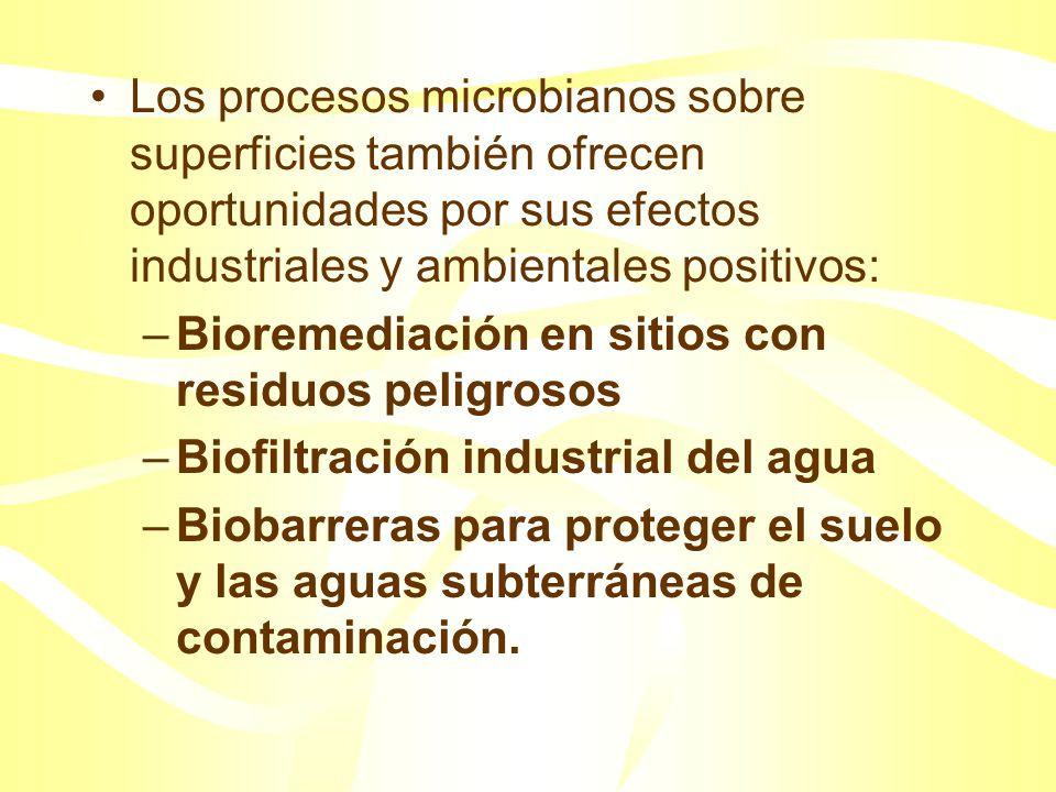 Así nuevas estrategias basadas en un mejor conocimiento de cómo las bacterias se sujetan, crecen y se desprenden son una urgente necesidad para muchas industrias y para la bioremediación.