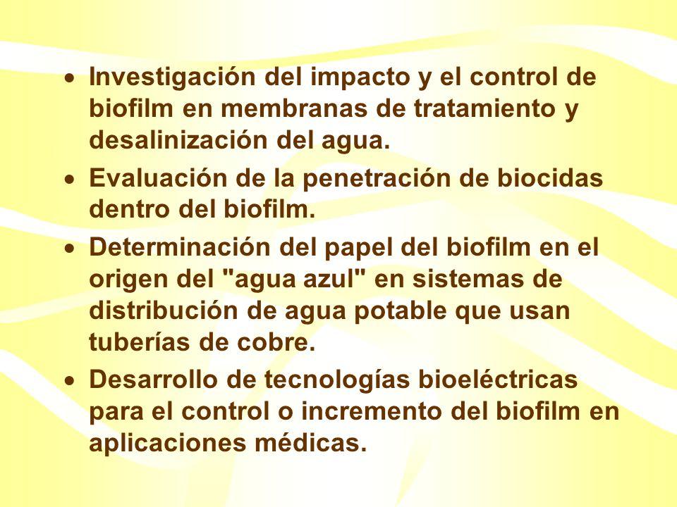 Desarrollo de tecnologías de biobarreras y bioremediación. Investigación sobre el impacto del crecimiento renovado del biofilm en los sistemas de dist