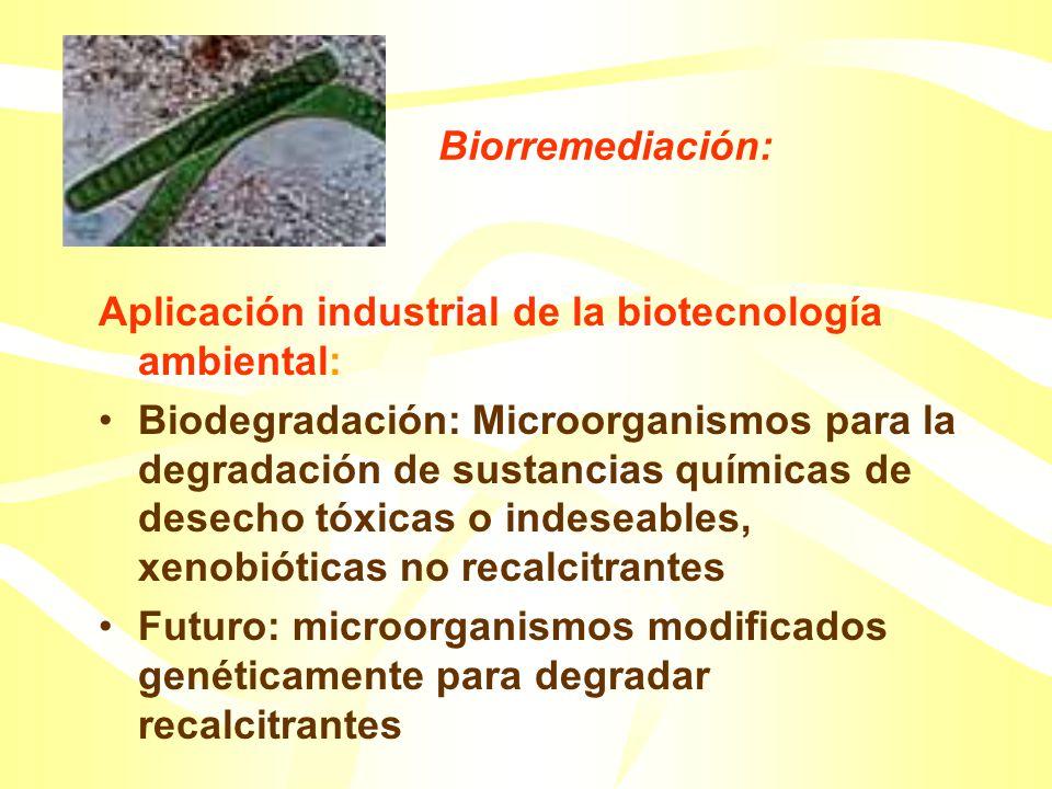 Investigación del impacto y el control de biofilm en membranas de tratamiento y desalinización del agua. Evaluación de la penetración de biocidas dent