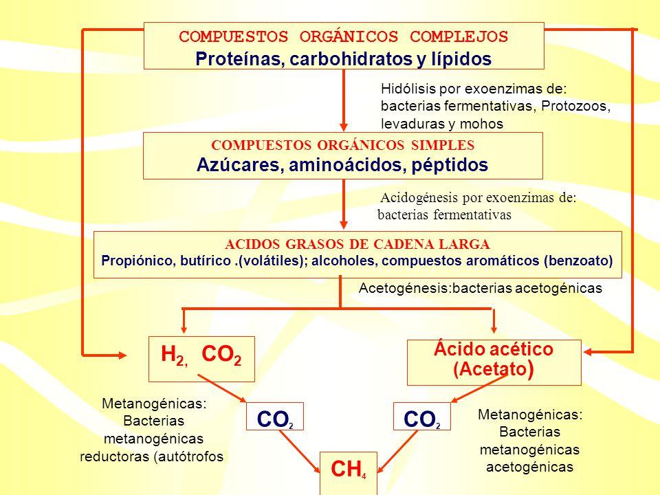 Proceso: Requiere de interacciones sinérgicas entre cuatro grupos microbianos: –I. Bacterias hidrolíticas –II. Bacterias fermentadoras –III. Bacterias