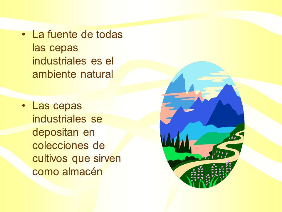 La fuente de todas las cepas industriales es el ambiente natural Las cepas industriales se depositan en colecciones de cultivos que sirven como almacén