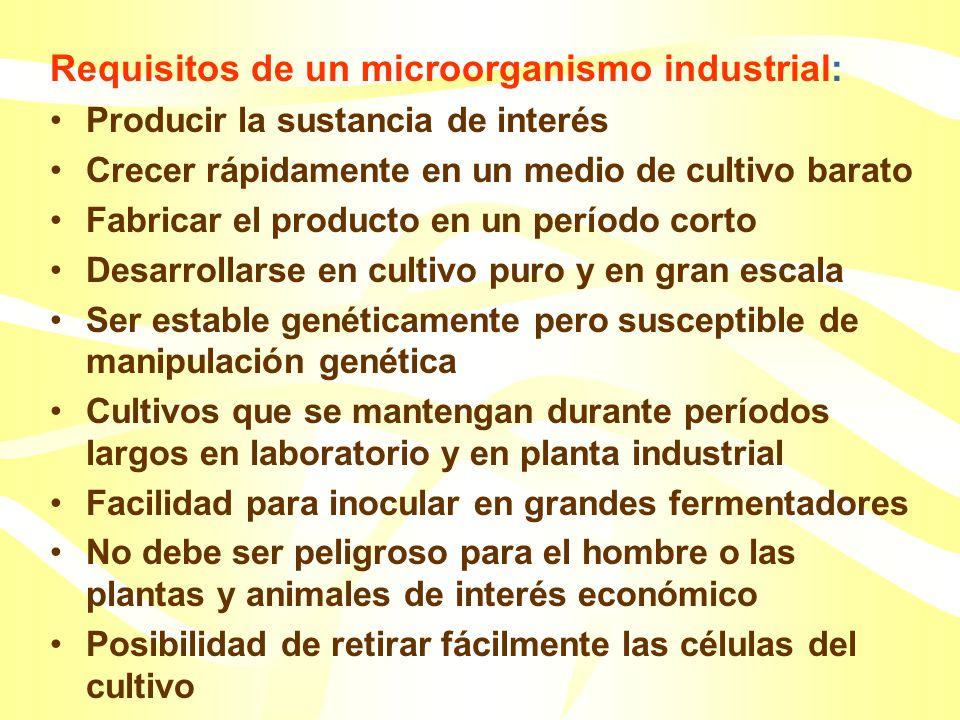 La fuente de todas las cepas industriales es el ambiente natural Las cepas industriales se depositan en colecciones de cultivos que sirven como almacé