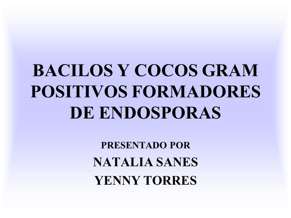 BACILOS Y COCOS GRAM POSITIVOS FORMADORES DE ENDOSPORAS PRESENTADO POR NATALIA SANES YENNY TORRES