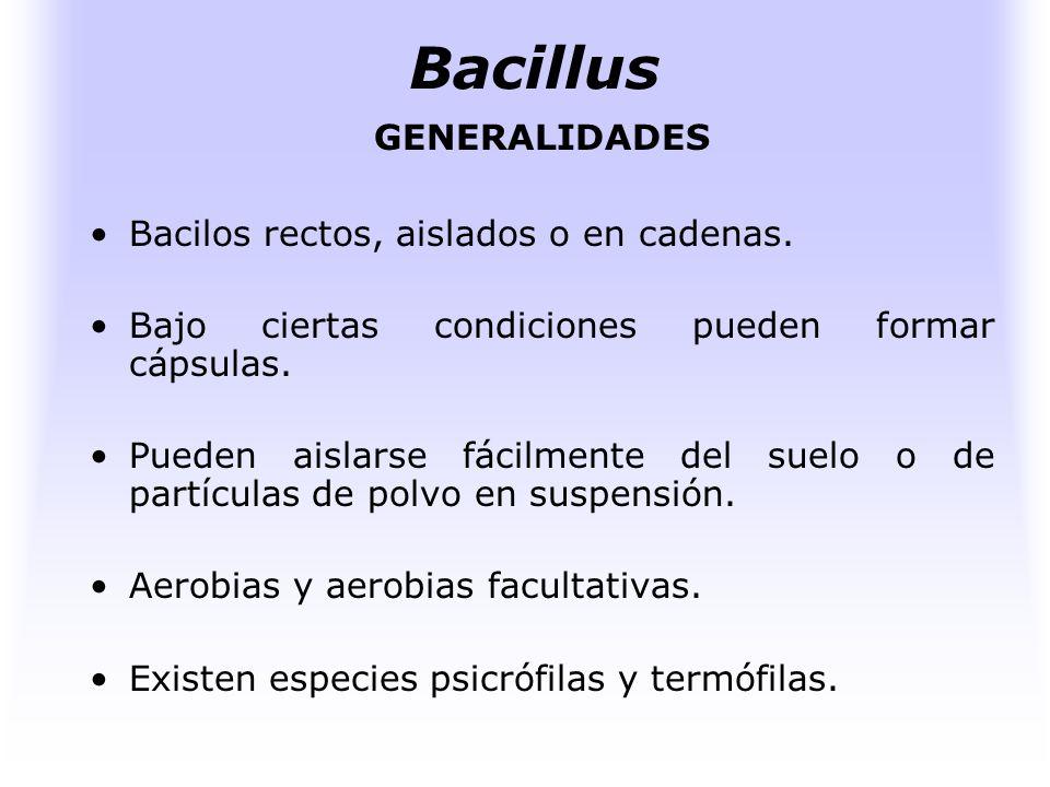 WWW.microbiologia.com Bacillus
