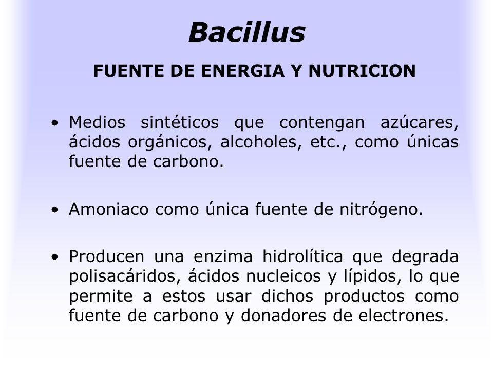 Bacillus HABITAT Su hábitat principal es el suelo, aunque se encuentran ampliamente difundidos también en las aguas, sedimentos marinos, alimentos, pr