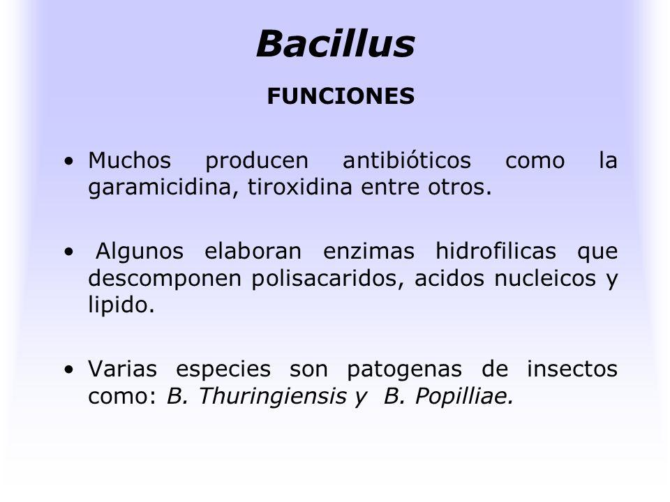 Bacillus FUENTE DE ENERGIA Y NUTRICION Medios sintéticos que contengan azúcares, ácidos orgánicos, alcoholes, etc., como únicas fuente de carbono.