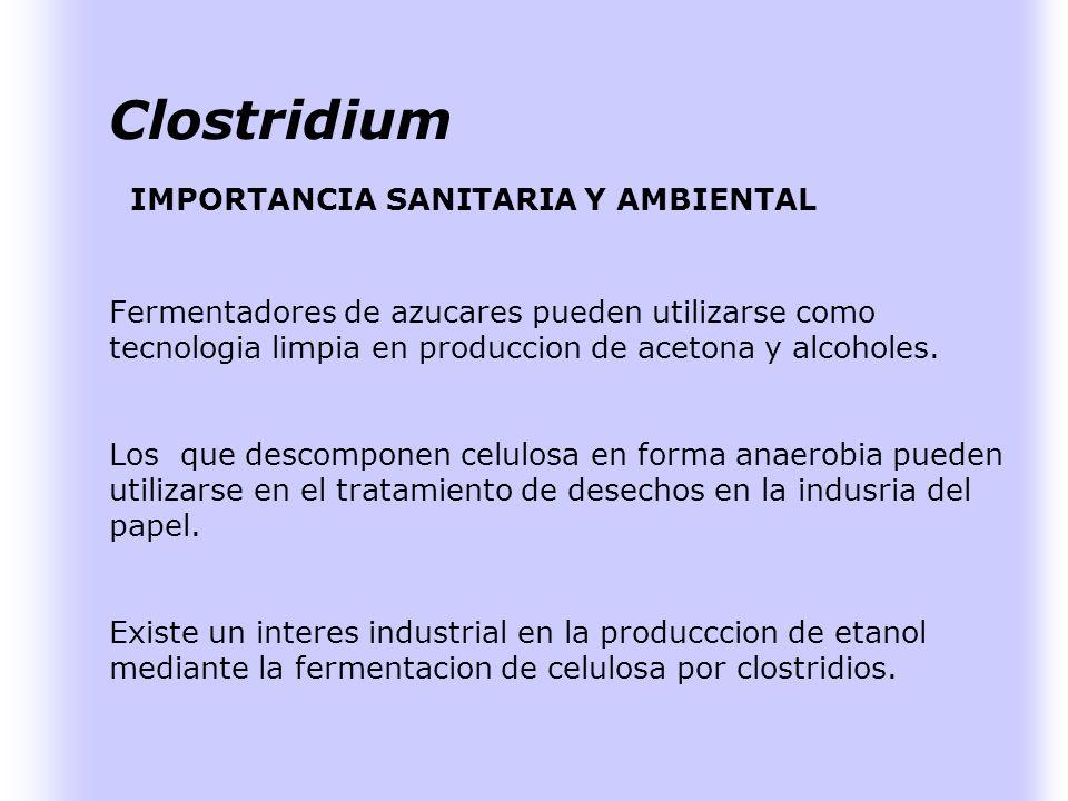 Clostridium IMPORTANCIA SANITARIA Y AMBIENTAL Pueden provocar enfermedades en las personas por la produccion de toxinas: botulismo, tetanos. Los clost