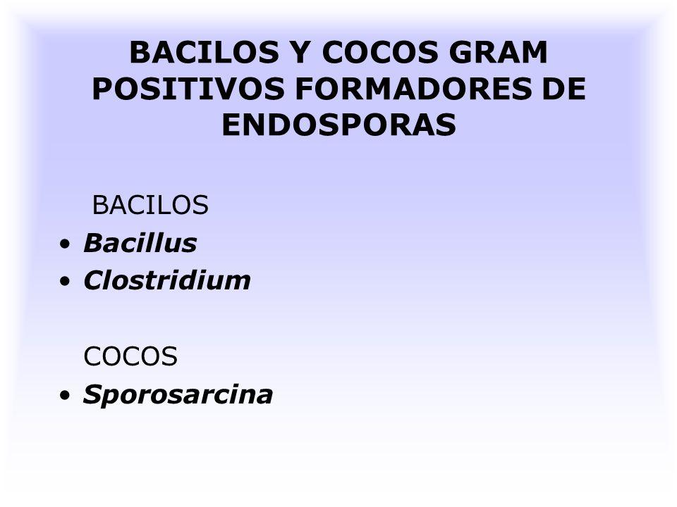 PRINCIPALES GÉNEROS Se han encontrado varios g é neros de bacterias formadoras de endosporas.