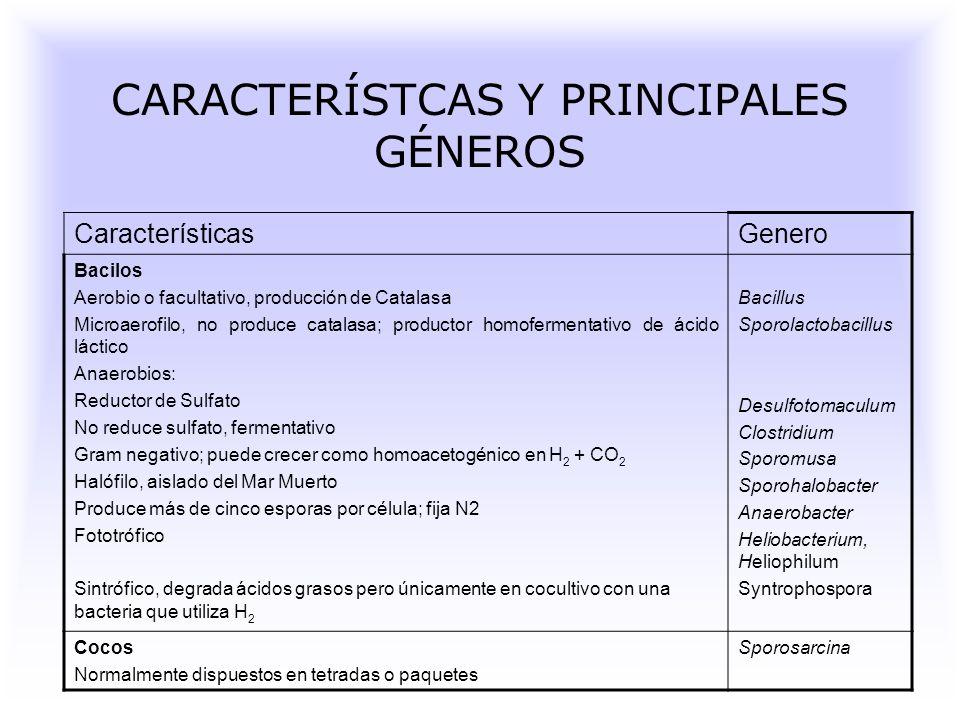 CARACTERÍSTCAS Y PRINCIPALES GÉNEROS CaracterísticasGenero Bacilos Aerobio o facultativo, producción de Catalasa Microaerofilo, no produce catalasa; productor homofermentativo de ácido láctico Anaerobios: Reductor de Sulfato No reduce sulfato, fermentativo Gram negativo; puede crecer como homoacetogénico en H 2 + CO 2 Halófilo, aislado del Mar Muerto Produce más de cinco esporas por célula; fija N2 Fototrófico Sintrófico, degrada ácidos grasos pero únicamente en cocultivo con una bacteria que utiliza H 2 Bacillus Sporolactobacillus Desulfotomaculum Clostridium Sporomusa Sporohalobacter Anaerobacter Heliobacterium, Heliophilum Syntrophospora Cocos Normalmente dispuestos en tetradas o paquetes Sporosarcina