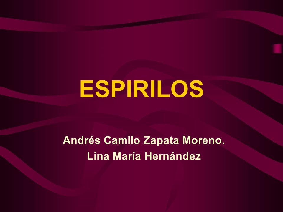 ESPIRILOS Andrés Camilo Zapata Moreno. Lina María Hernández