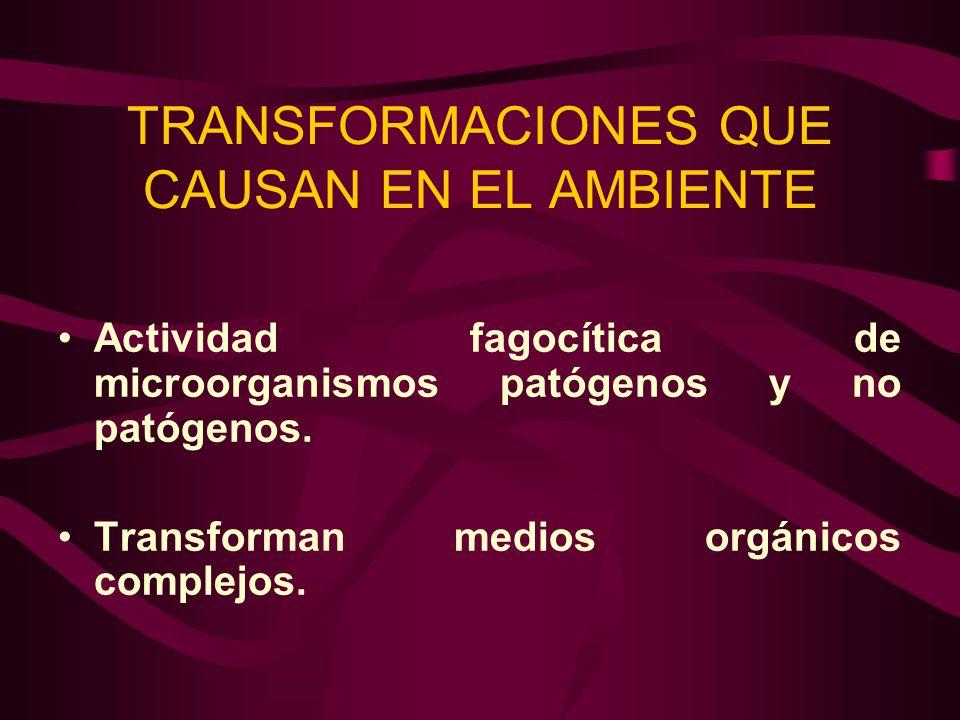 TRANSFORMACIONES QUE CAUSAN EN EL AMBIENTE Actividad fagocítica de microorganismos patógenos y no patógenos. Transforman medios orgánicos complejos.