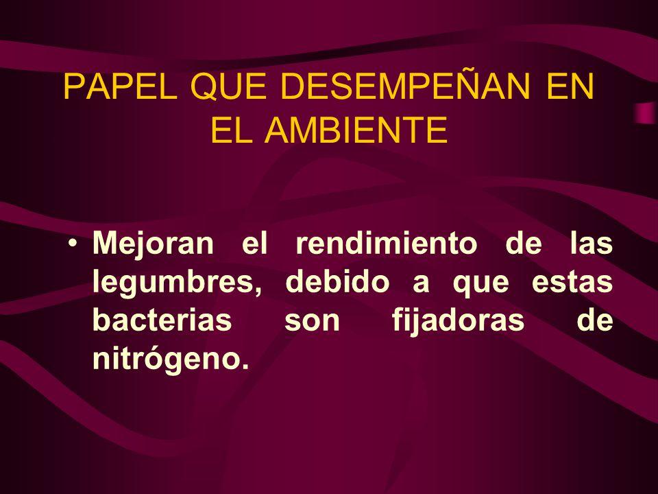 PAPEL QUE DESEMPEÑAN EN EL AMBIENTE Mejoran el rendimiento de las legumbres, debido a que estas bacterias son fijadoras de nitrógeno.