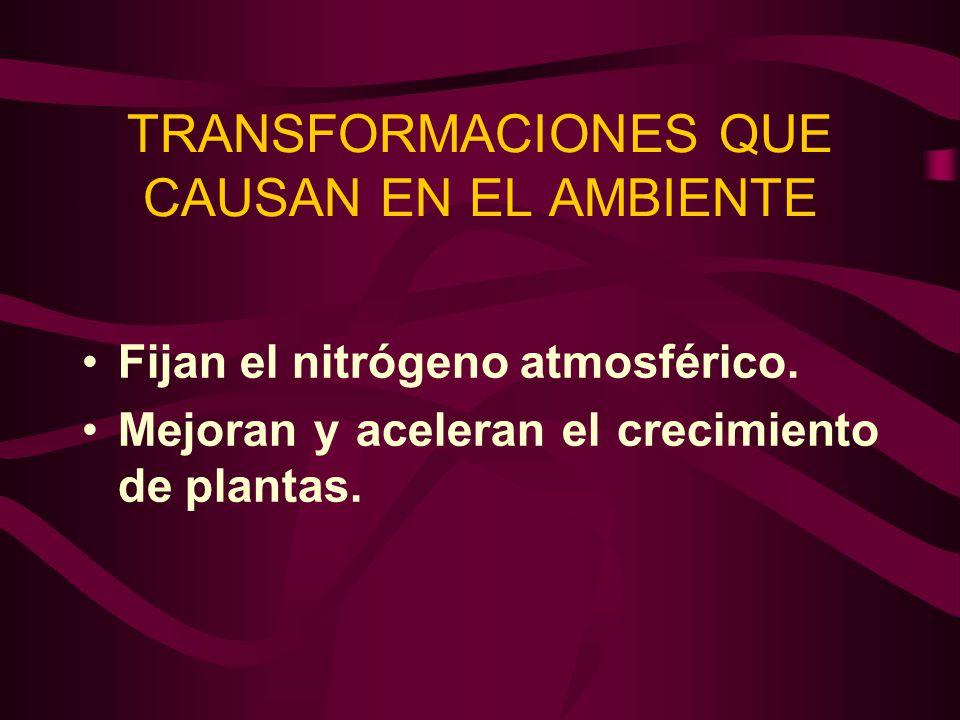 TRANSFORMACIONES QUE CAUSAN EN EL AMBIENTE Fijan el nitrógeno atmosférico. Mejoran y aceleran el crecimiento de plantas.