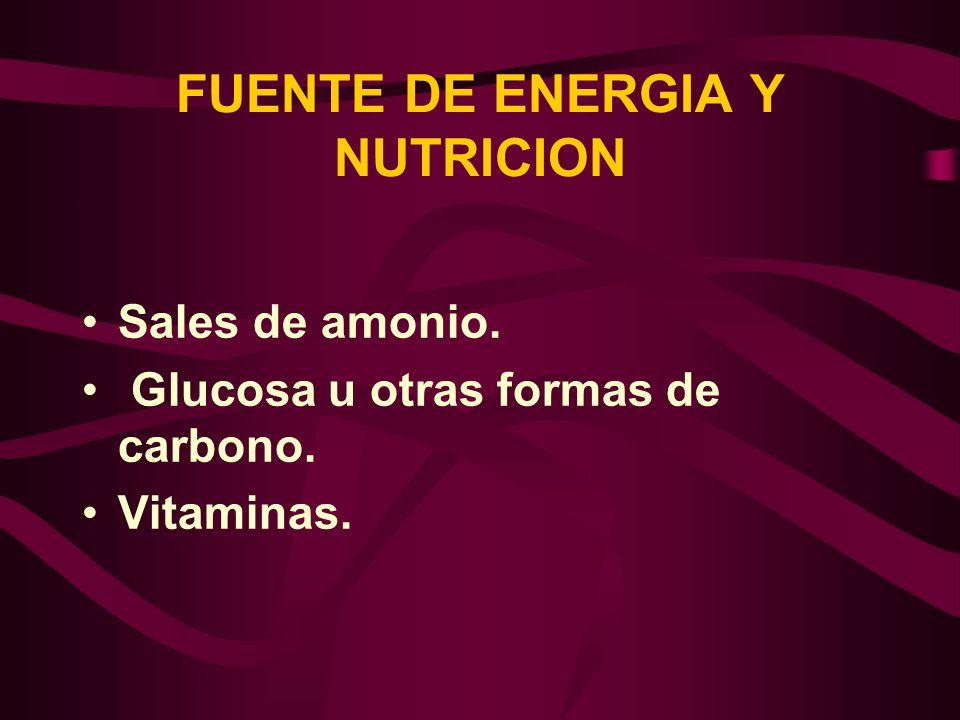 FUENTE DE ENERGIA Y NUTRICION Sales de amonio. Glucosa u otras formas de carbono. Vitaminas.