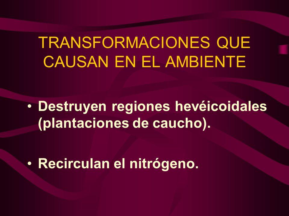 TRANSFORMACIONES QUE CAUSAN EN EL AMBIENTE Destruyen regiones hevéicoidales (plantaciones de caucho). Recirculan el nitrógeno.