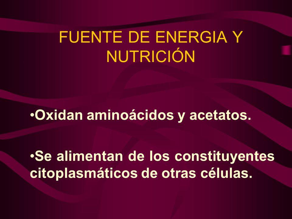 FUENTE DE ENERGIA Y NUTRICIÓN Oxidan aminoácidos y acetatos. Se alimentan de los constituyentes citoplasmáticos de otras células.