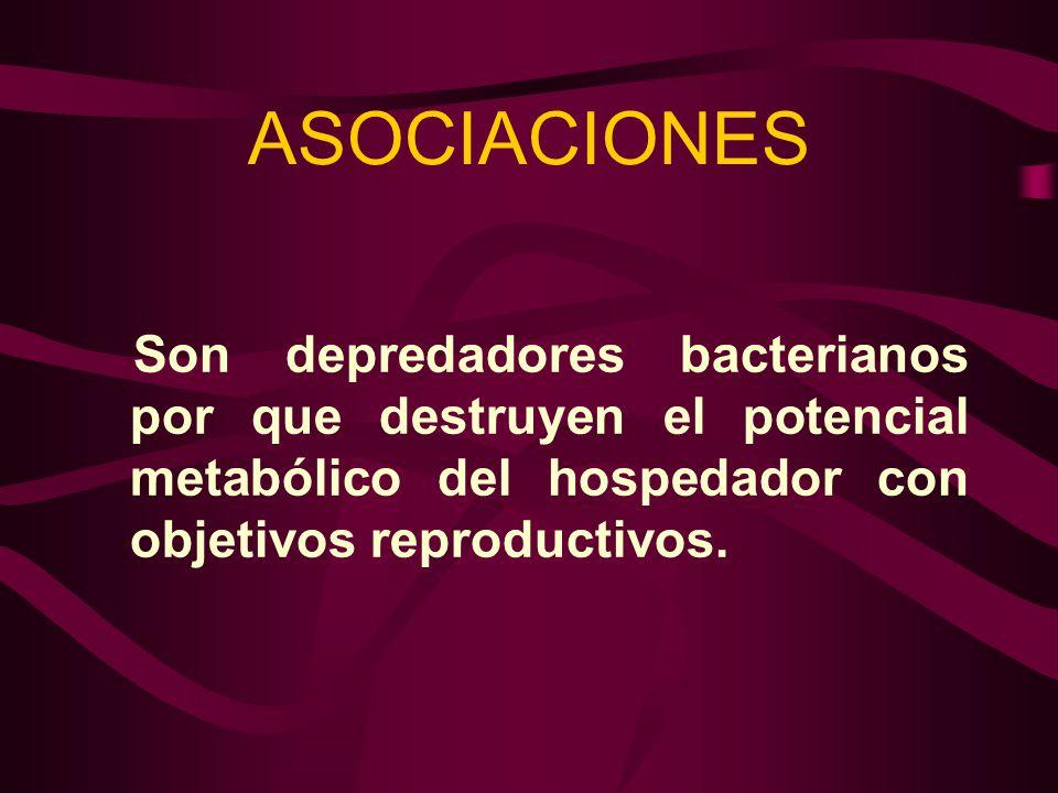 ASOCIACIONES Son depredadores bacterianos por que destruyen el potencial metabólico del hospedador con objetivos reproductivos.