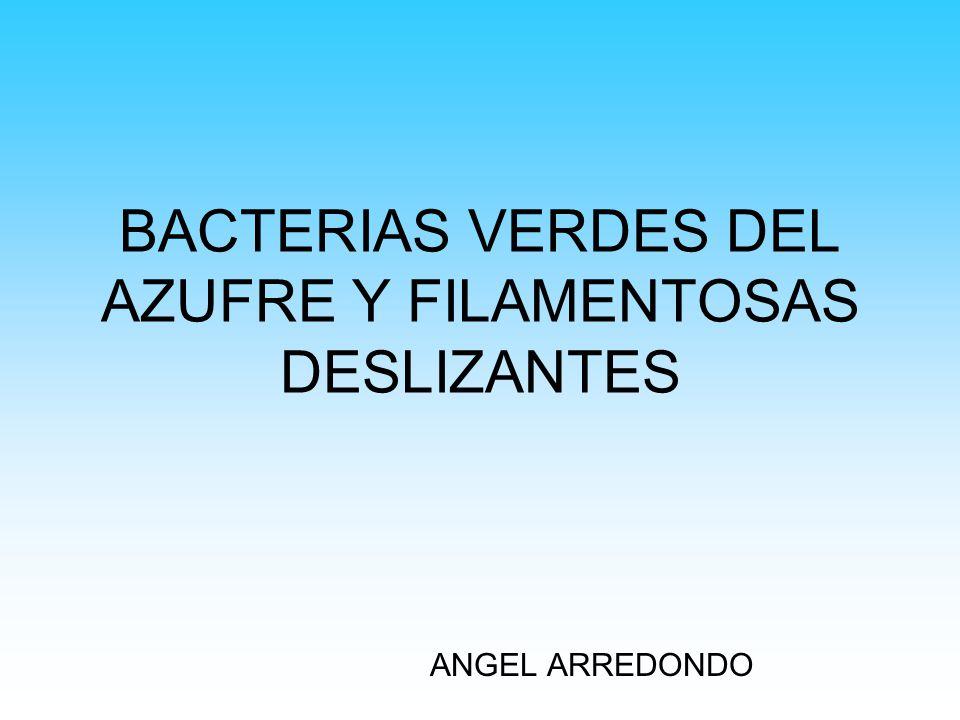 CARACTERÍSTICAS Y PRINCIPALES GÉNEROS (Bacterias verdes del azufre) Se encuentran unicelulares o en agregados, su movilidad es por deslizamiento, estructura fotosintética en clorosomas, crecimiento fototrófico bajo condiciones anaeróbicas (generalmente).