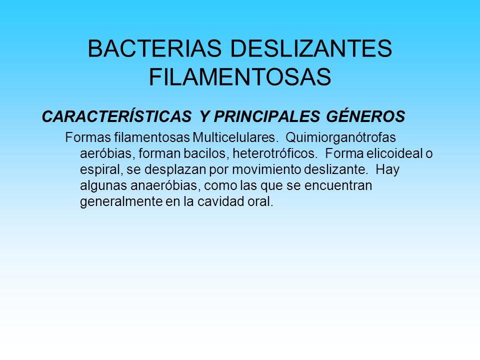 BACTERIAS DESLIZANTES FILAMENTOSAS CARACTERÍSTICAS Y PRINCIPALES GÉNEROS Formas filamentosas Multicelulares. Quimiorganótrofas aeróbias, forman bacilo