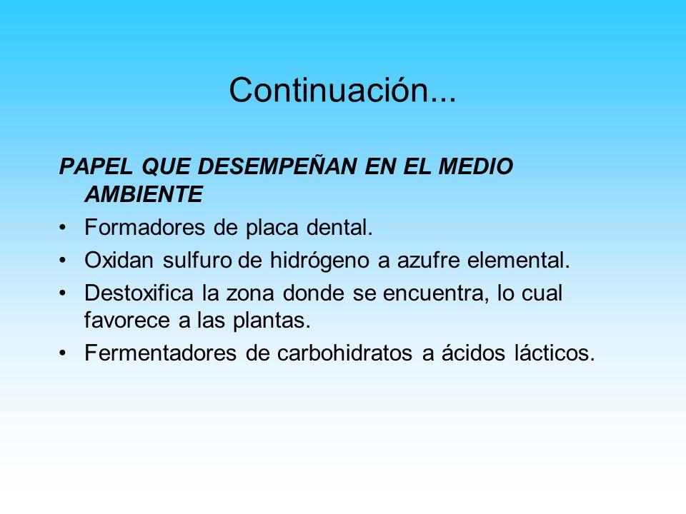 Continuación... PAPEL QUE DESEMPEÑAN EN EL MEDIO AMBIENTE Formadores de placa dental. Oxidan sulfuro de hidrógeno a azufre elemental. Destoxifica la z