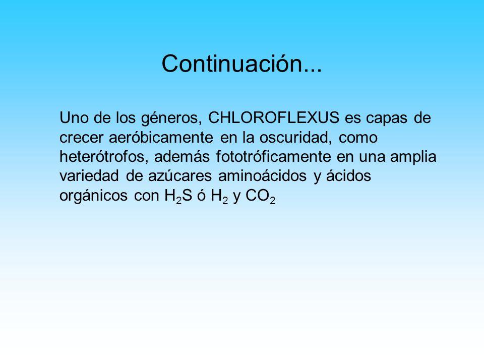 Continuación... Uno de los géneros, CHLOROFLEXUS es capas de crecer aeróbicamente en la oscuridad, como heterótrofos, además fototróficamente en una a