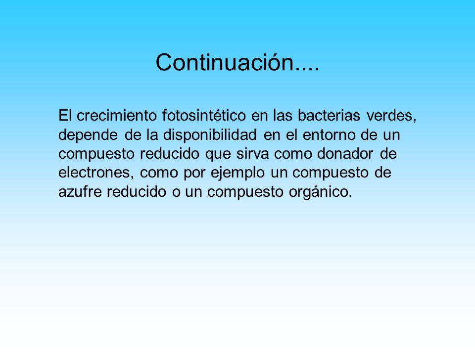 Continuación.... El crecimiento fotosintético en las bacterias verdes, depende de la disponibilidad en el entorno de un compuesto reducido que sirva c