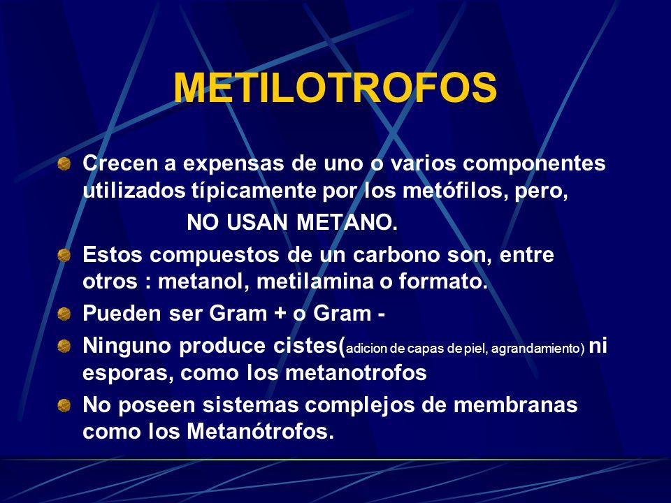 PRODUCCION DE METANOL (CH 4 OH) menores costes energéticos menores costes económicos menores costes ambientales