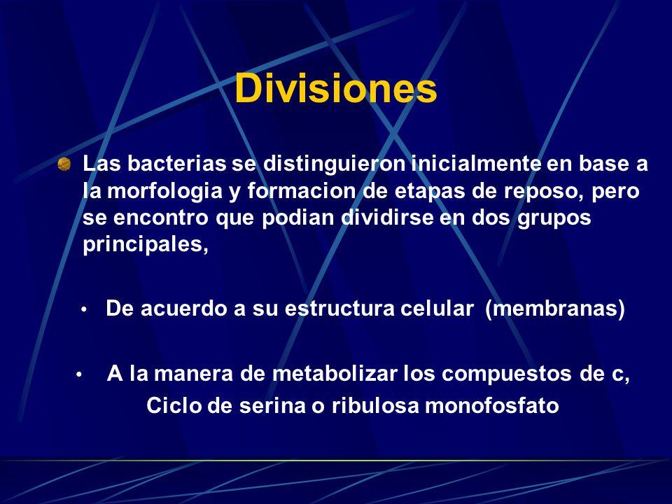 Substratos usados por las bacterias metilotróficas Sustratos usados para desarrollo Sustratos oxidados, pero no usados para su metabolismo Metano, CH4 Metanol, Metilamina Di-, trimetilamina Trimetilsulfonio Formato Monoxido de carbono Eter Dimetil Dimetil carbonato Amonio Etileno Clorometano Bromometano Hidrocarburos Grandes (etano,propano)