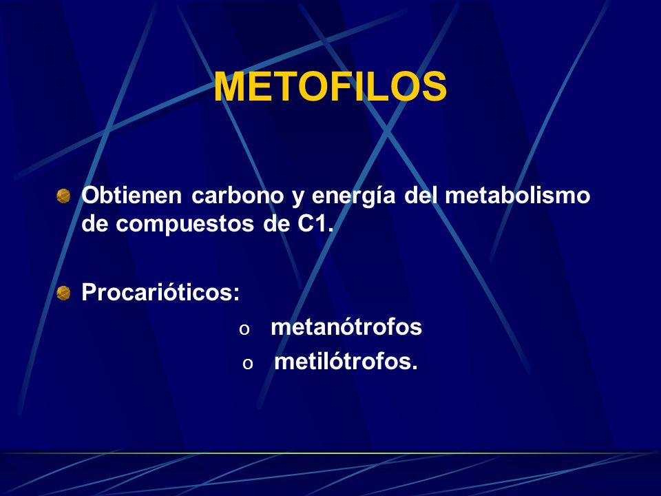 METOFILOS: METANOTROFOS Y METILOTROFOS Johana Villalba Ozuna Sandra Milena Gómez