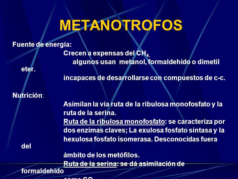 METOFILOS Obtienen carbono y energía del metabolismo de compuestos de C1.