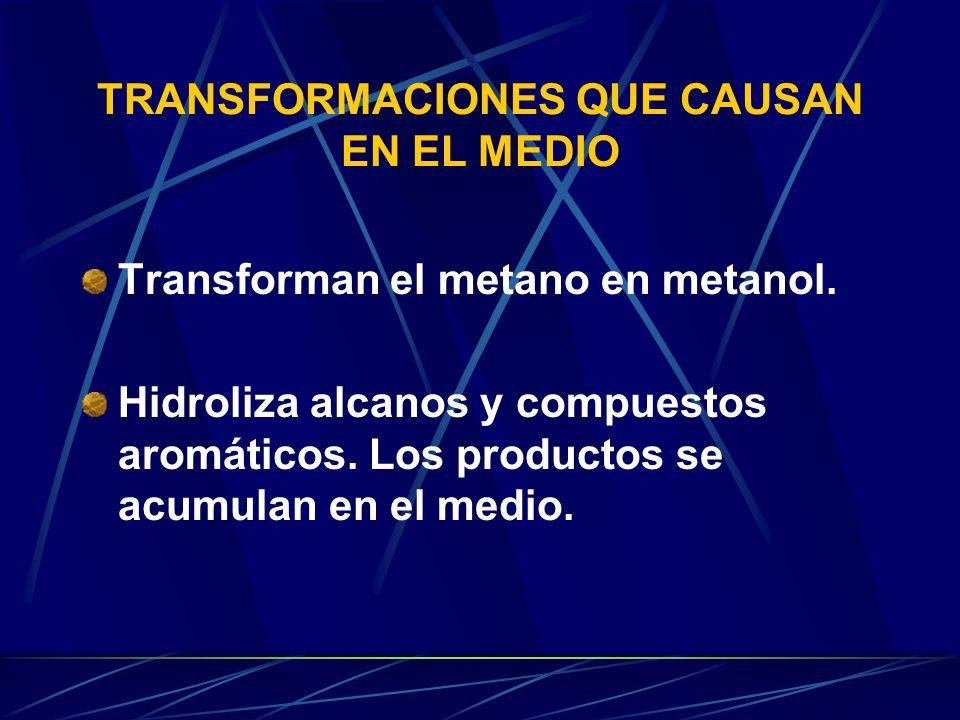 TRANSFORMACIONES QUE CAUSAN EN EL MEDIO Transforman el metano en metanol.