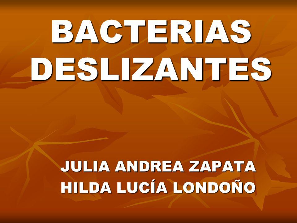 BACTERIAS DESLIZANTES JULIA ANDREA ZAPATA HILDA LUCÍA LONDOÑO