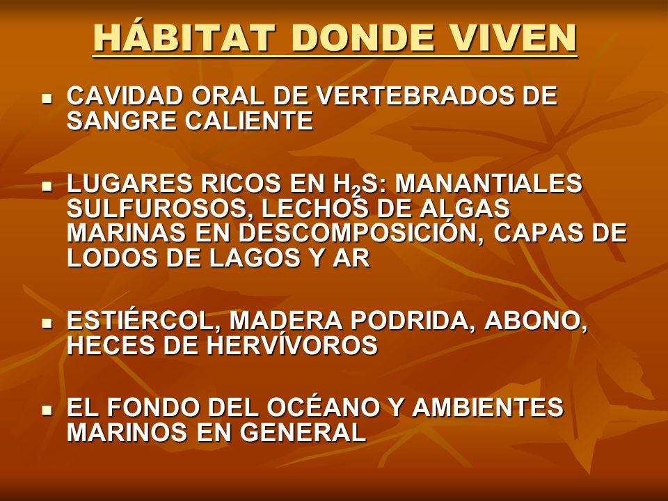 HÁBITAT DONDE VIVEN CAVIDAD ORAL DE VERTEBRADOS DE SANGRE CALIENTE CAVIDAD ORAL DE VERTEBRADOS DE SANGRE CALIENTE LUGARES RICOS EN H 2 S: MANANTIALES