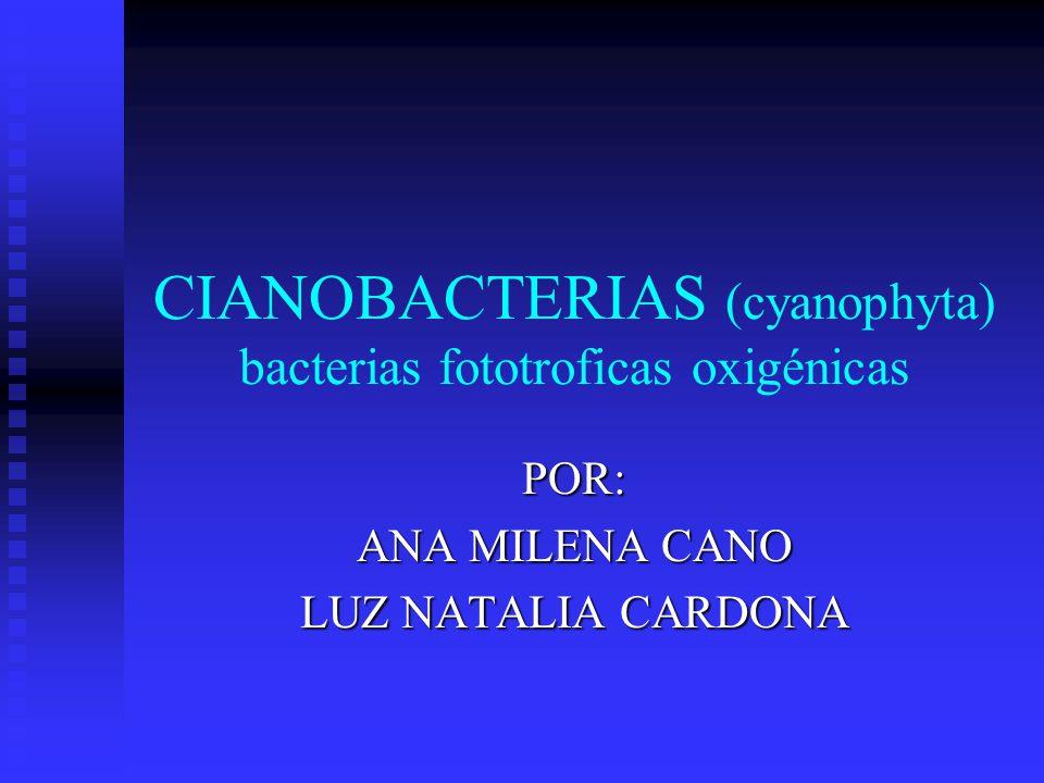 CIANOBACTERIAS (cyanophyta) bacterias fototroficas oxigénicas POR: ANA MILENA CANO LUZ NATALIA CARDONA