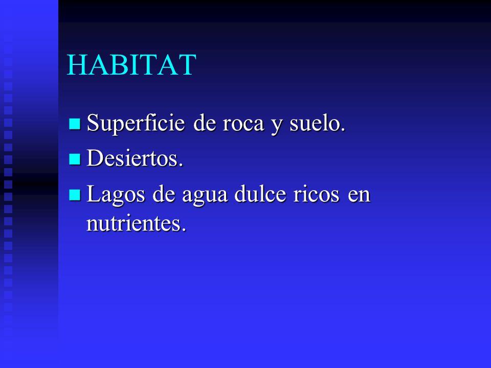 HABITAT Superficie de roca y suelo.Superficie de roca y suelo.