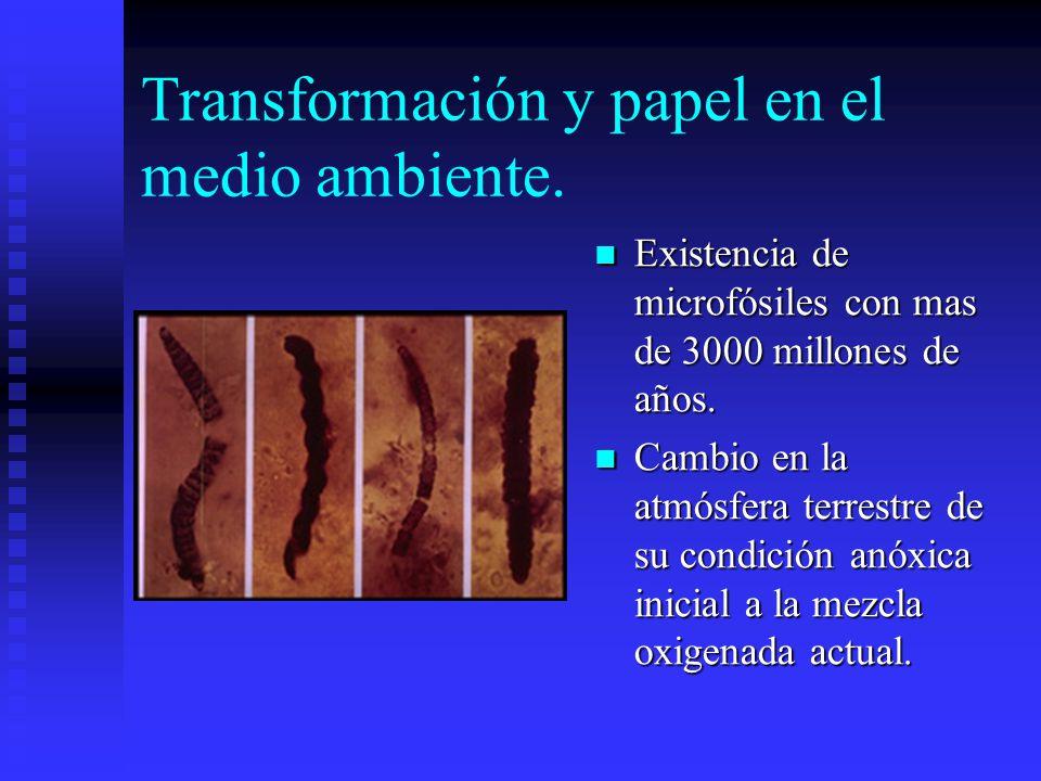 Transformación y papel en el medio ambiente.