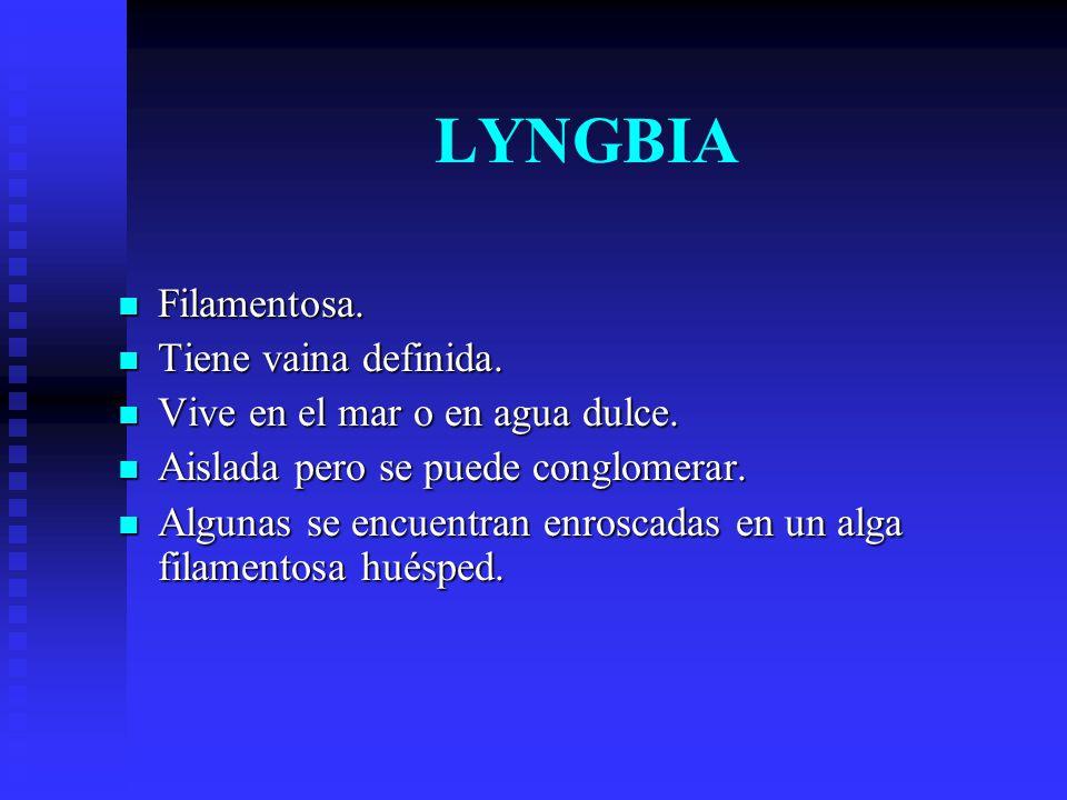 LYNGBIA Filamentosa.Tiene vaina definida. Vive en el mar o en agua dulce.