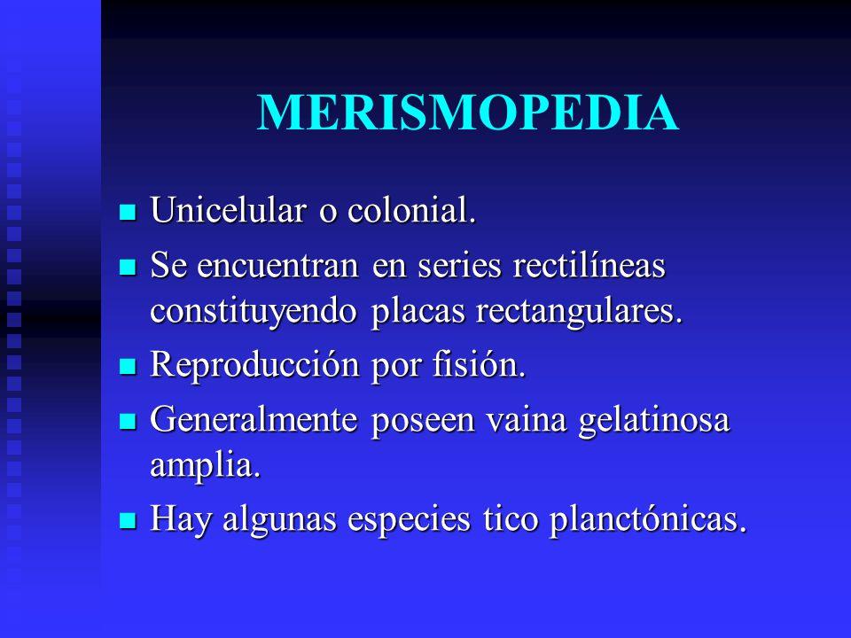 MERISMOPEDIA Unicelular o colonial.Unicelular o colonial.