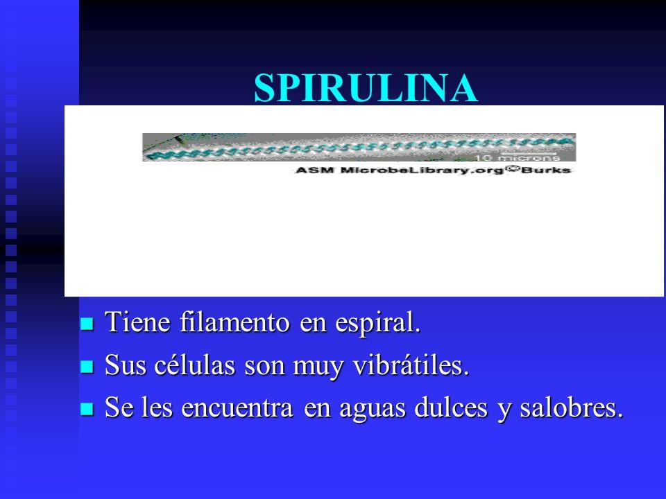 SPIRULINA Tiene filamento en espiral.Sus células son muy vibrátiles.