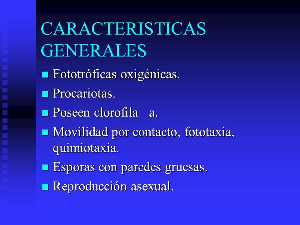 CARACTERISTICAS GENERALES Fototróficas oxigénicas.